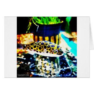 Baby Puffer Fish Card