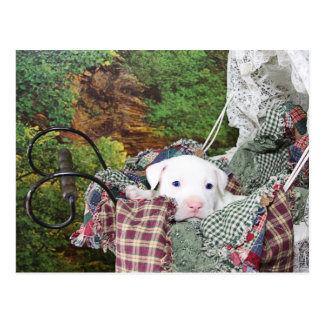 Baby Puppy Carriage Ride Postcard