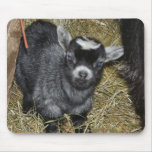 Baby Pygmy Goat Mousepads