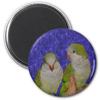 Baby Quaker Parrot Pair Animal Magnet