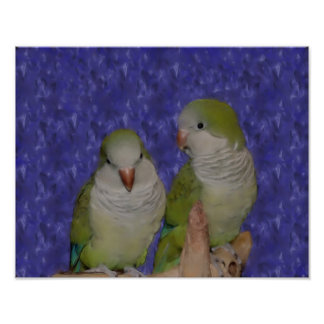 Baby Quaker Parrot Pair Photo Painting Posters