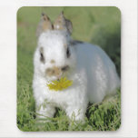 Baby Rabbit Eating Flower Mouse Pad