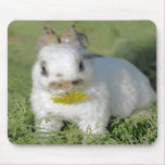 Baby Rabbit Eating Flower Mousepads