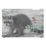 Baby Raccoon Cover For The iPad Mini