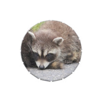 Baby Raccoon Jelly Belly Candy Tin
