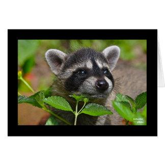 Baby Raccoon Notecard