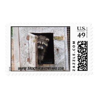 baby raccoon postage stamp