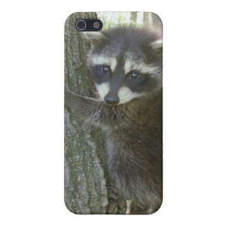 baby raccoon speck  cover