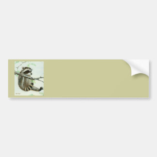 Baby Raccoon & Texas Mesquite Tree Bumper Sticker