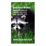 Baby Raccoons Business Cards