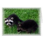 Baby Raccoons Greeting Card