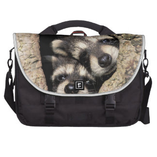 Baby raccoons in tree cavity Procyon Commuter Bags
