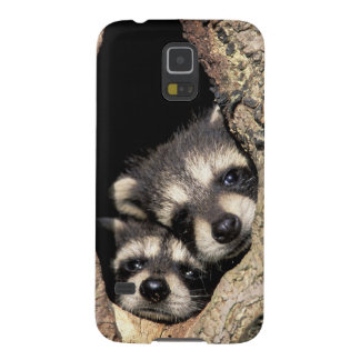 Baby raccoons in tree cavity Procyon Galaxy S5 Cover