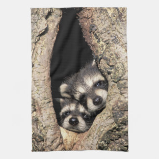 Baby raccoons in tree cavity Procyon Hand Towels