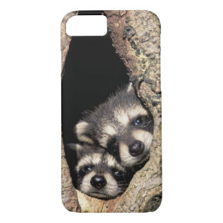 Baby raccoons in tree cavity Procyon iPhone 8/7 Case