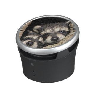 Baby raccoons in tree cavity Procyon Speaker