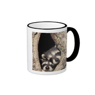 Baby raccoons in tree cavity Procyon Ringer Coffee Mug