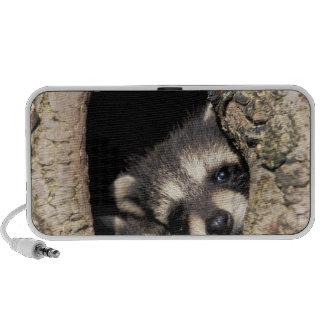 Baby raccoons in tree cavity Procyon Mp3 Speakers