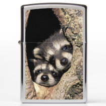 Baby raccoons in tree cavity Procyon Zippo Lighter