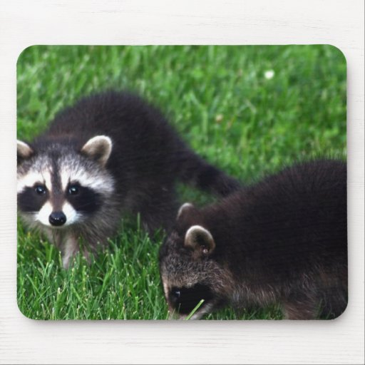 Baby Raccoons Mouse Pad