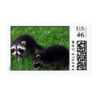 Baby Raccoons Postage Stamp