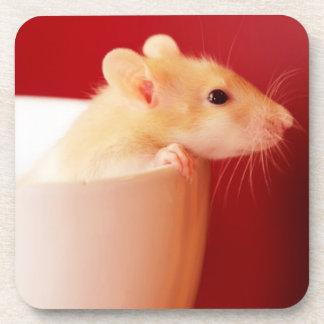 Baby rat in teacup. coaster