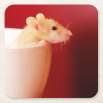 Baby rat in teacup. square paper coaster