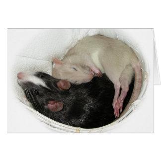 Baby Rat Sleeping Card
