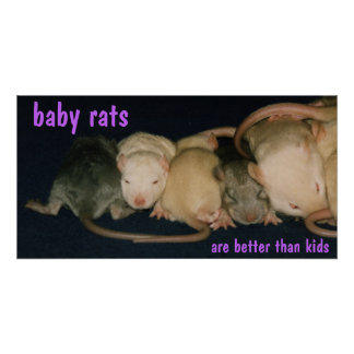 baby rats poster