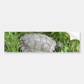 Baby Red Eared Slider Turtle Bumper Sticker
