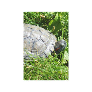 Baby Red Eared Slider Turtle Canvas Print