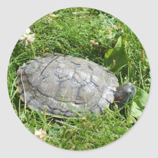 Baby Red Eared Slider Turtle Classic Round Sticker