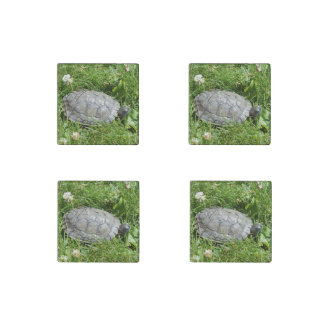 Baby Red Eared Slider Turtle Stone Magnet