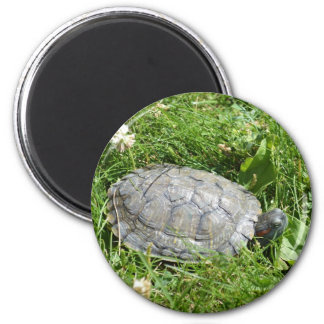 Baby Red Eared Slider Turtle 2 Inch Round Magnet