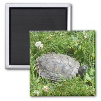 Baby Red Eared Slider Turtle 2 Inch Square Magnet