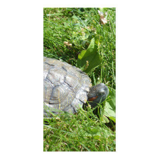 Baby Red Eared Slider Turtle Photo Card