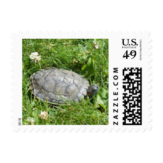 Baby Red Eared Slider Turtle Stamps