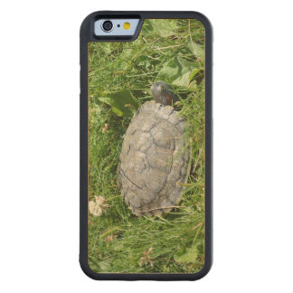 Baby Red Eared Slider Turtle Carved® Maple iPhone 6 Bumper