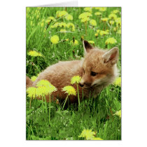 Baby Red Fox in Green Field With Yellow Flowers