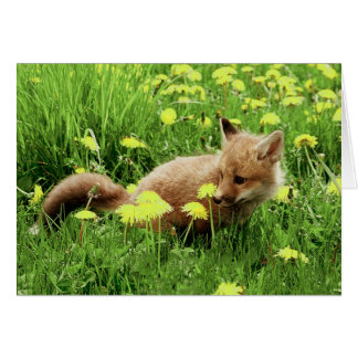Baby Red Fox in Green Field With Yellow Flowers Card