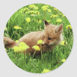 Baby Red Fox in Green Field With Yellow Flowers Classic Round Sticker