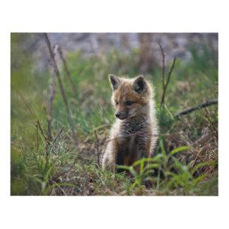 Baby Red Fox Panel Wall Art