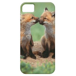 Baby Red Foxes iPhone 5 Cases