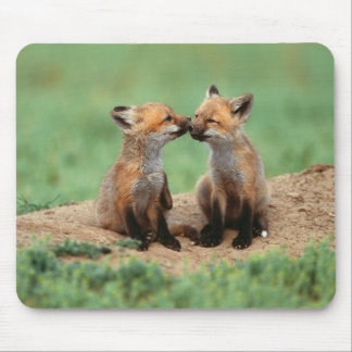 Baby Red Foxes Mouse Pad