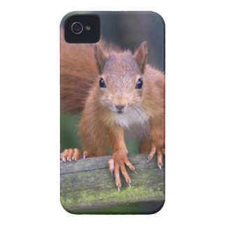 Baby Red iPhone 4 Case-Mate Case