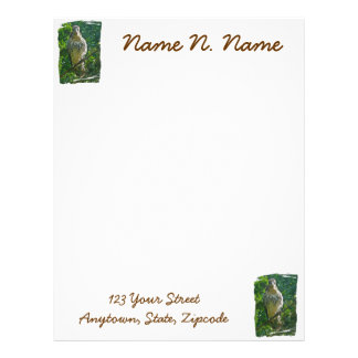 Baby Red Tailed Hawk Letterhead Stationery
