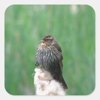 Baby Redwing Blackbird Square Sticker