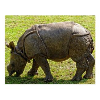 Baby Rhino Post Card
