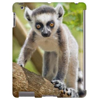 Baby ring-tailed lemur