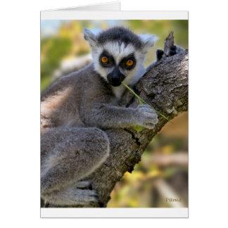 Baby Ring Tailed Lemur Card